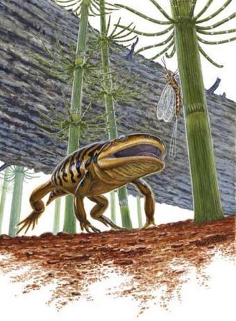 20080522094438-ranamandra-presentaba-caracteristicas-comunes-ranas-salamandras.jpg