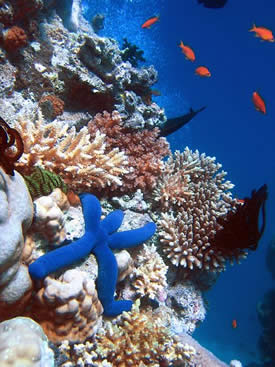 20081114172747-arrecifeelgranaccecifeaustralia.jpg