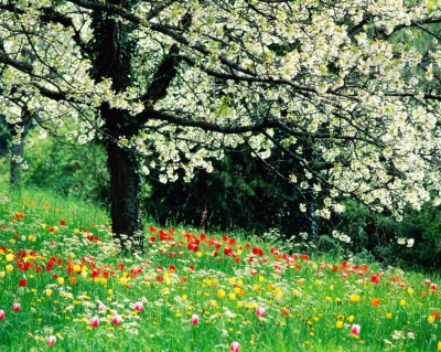 20090320105510-primavera.jpg