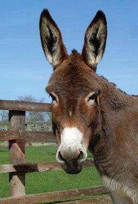 20090806124318-burro.jpg