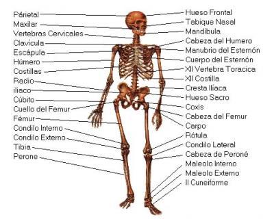 20090903110734-esqueleto.jpg
