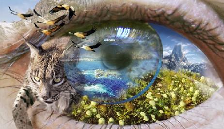 20110113184822-ojo-naturaleza-web.jpg