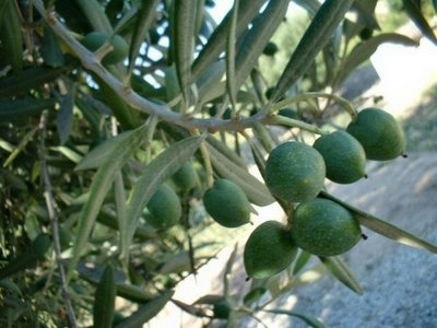 20110829114024-oliveira.jpg