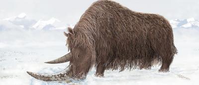 20110904114936-rinoceronte-do-tibet.jpg