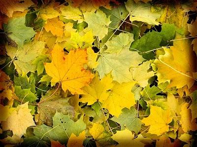 20110920170713-foglie-gialle.jpg