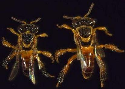 20120111105455-abellas-soldado.jpg