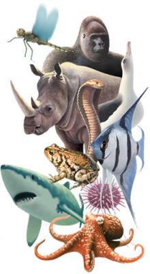 20120902121853-animal-diversity-web-enciclopedia-natureza.jpg