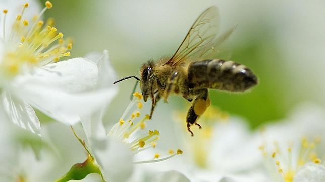 20130228090300-abella-flor.jpg