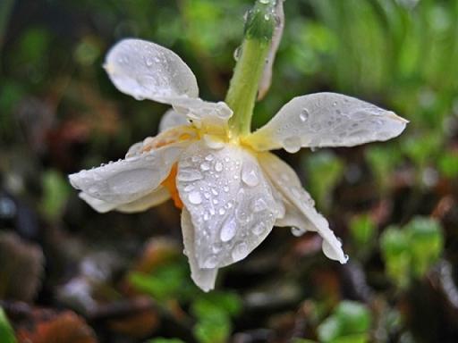 20140501000442-chuvia-de-primavera.jpg