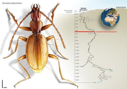 20140708155314-nueva-especie-de-escarabajo-en-la-cueva-mas-profunda-del-mundo-image-380.jpg