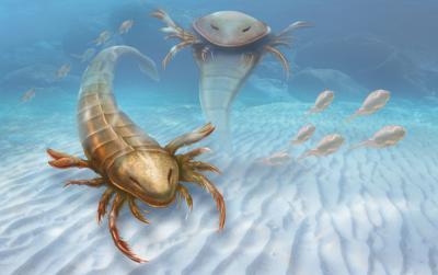 20150903093225-descubren-un-escorpion-marino-gigante-image-380.jpg