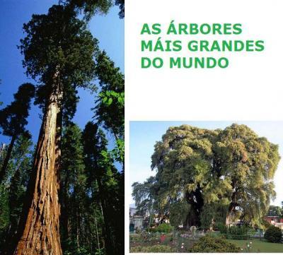 20151018130840-arbores.jpg