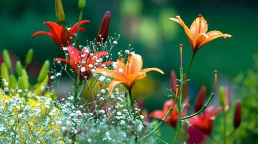 20160306082802-imagenes-hermosas-de-primavera.jpg