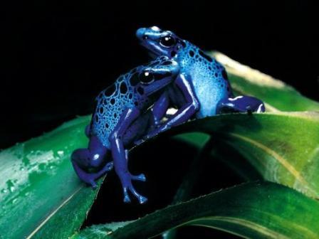 20170123231537-frog-14.jpg