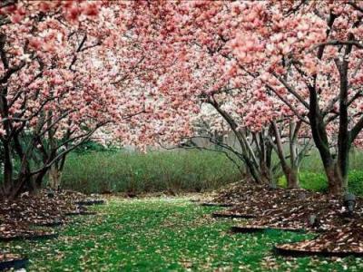 20080321235305-primavera2.jpg