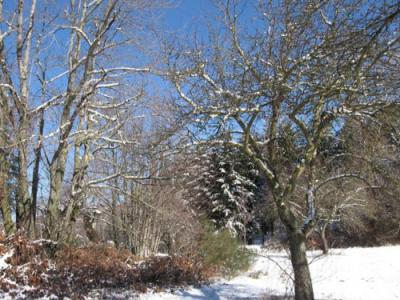 20081221151221-inverno-castagni.jpg