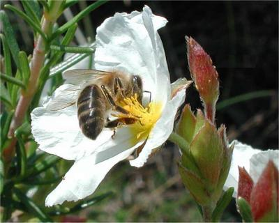 20091013185043-abellas.jpg