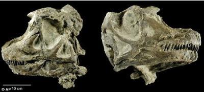 20100225100306-abydosaurio.jpg