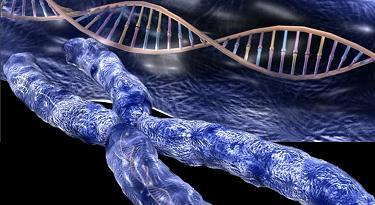 20100618095501-cromosoma1.jpg