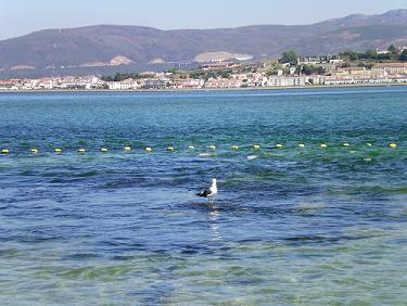 20100820130148-paseando-pola-auga.jpg
