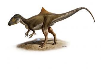 20100909123456-hallado-nuevo-dinosaurio-cuenca.jpg