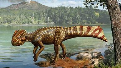 20101208175152-koreaceratops2-478x2702.jpg