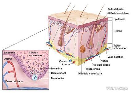 20110615191524-melanoma.jpg