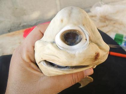 20111130191455-one-eyed-cyclops-shark-pup-holding-face-41775-600x450-1.jpg