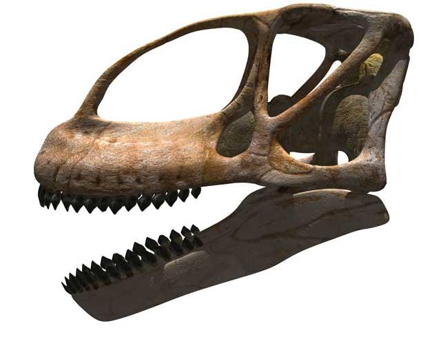 20120404093514-turiosaurus-riodevensis-2.jpg