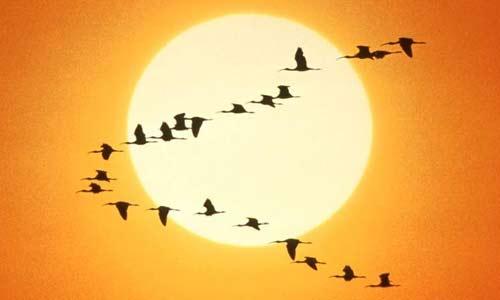 20120409184532-sol-aves.jpg