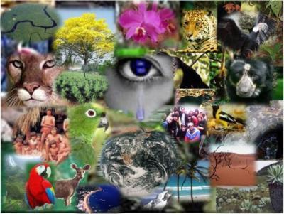20120522160337-d.i.biodiversidade.jpg