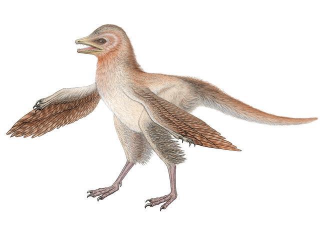 20130128001348-dinosauio-alado.jpg