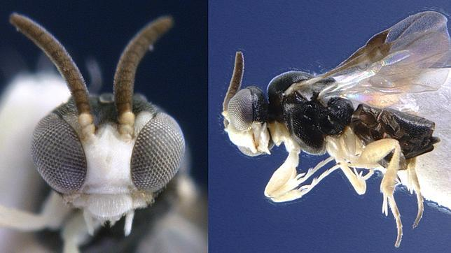 20130405082020-avispa-espanola-hormigas.jpg