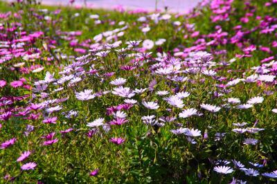 20130501113750-campos-en-flor.jpg