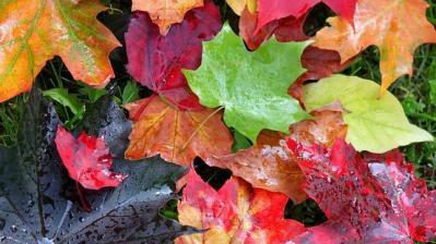 20140929171807-color-hojas-otono-.jpg