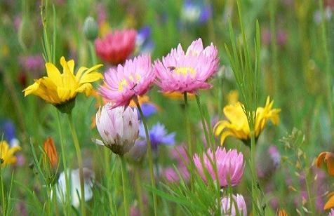 20150320092508-flores-en-primavera.jpg