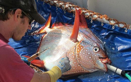 20150518000648-sn-fish.jpg