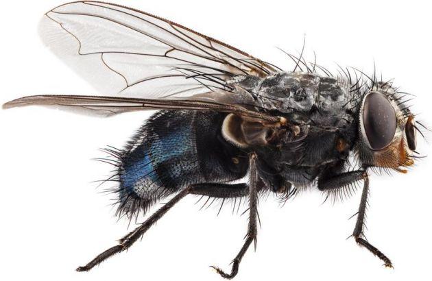 20150623100424-como-respiran-las-moscas.jpg