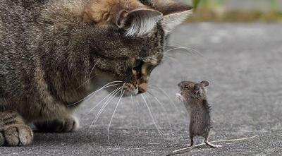 20160713105852-el-raton-y-el-gato1.jpg