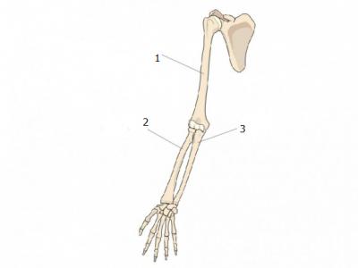 20180311121223-huesos.png