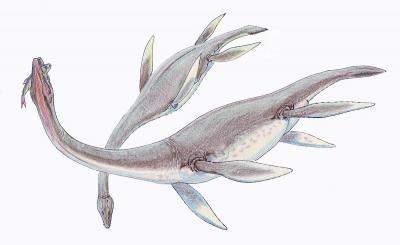 20180405131641-1200px-plesiosaurus-dolich1db.jpg