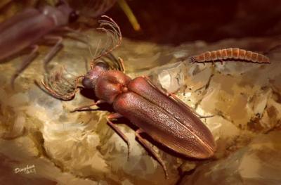 20210125094030-escarabajo1-1.jpg