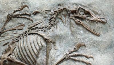 20210130173534-como-se-forman-los-fosiles.jpg
