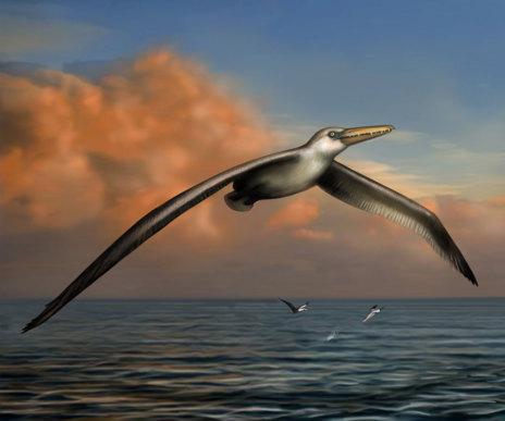 Reconstrucción artística del aspecto que tenía el ave 'Pelagornis...